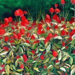00005 - Red Blossoms