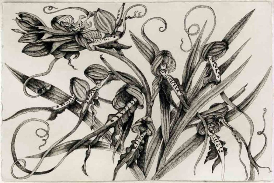 Himantoglossum (orchid)