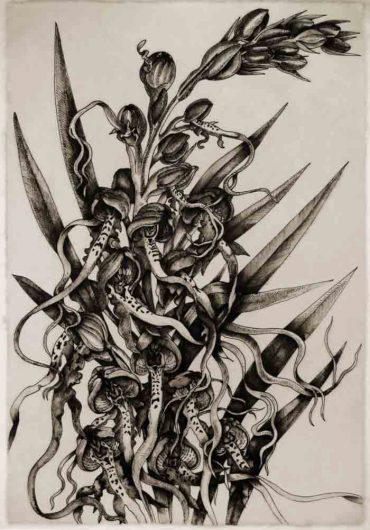 Himantoglossum II (orchid)