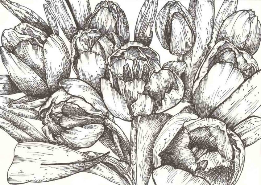 Tulips (drawing)