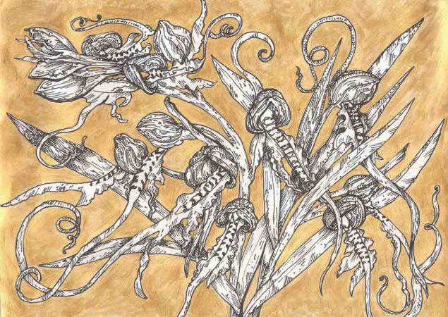 Orchids imantoglosson